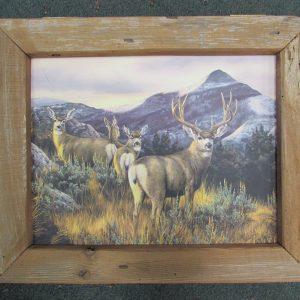 64 Mule Deer box