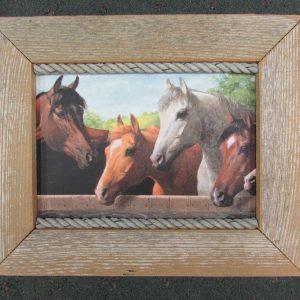 71 Horses at Rail box