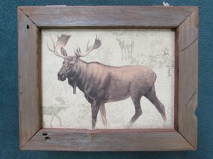 New Moose box
